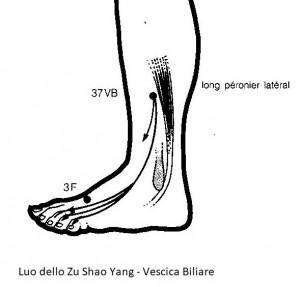 luo longitudinale dello zu shao yang